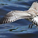 D gull has landed ! by Shubd