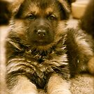 How To Be Cute (German Shepherd Puppy) by Lou Wilson