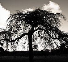 Old Tree in Black and White  by Marianne Ellis