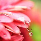 rain drops keep falling on my...flower by Kendal Dockery