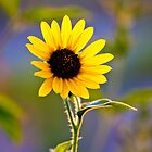 Proud Sunflower by Ken  Hurst