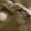 Tree Boa by Reg1