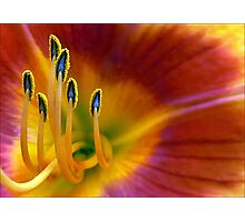 One Last Lily Photographic Print
