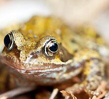 Rana temporaria - Common Garden Frog by Neil Clarke