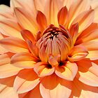 Architecture of a Dahlia by Kerry McQuaid