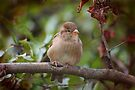 Baby Sparrow #2--What a Storm! by Eileen McVey