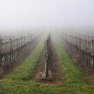 ~ I Heard it Through the Adelaide Hills Grape Vine ~  by LeeoPhotography
