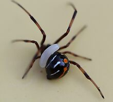 black widow and wasp egg? by katpartridge