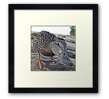 Inquisitive Framed Print