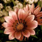 Spring flowers by jesscob23