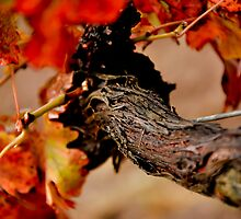 Warrabilla Wines, Rutherglen - Autumn Vine by Georgina James