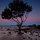 The Dusk Tree - Cleveland Qld. Australia by Beth  Wode