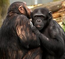We are just good friends! by Mark Hughes
