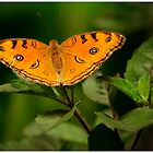 Orange Fairy by Neeraj Nema