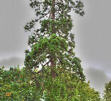 Tree by paradox0076