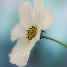 Cosmos by JEZ22