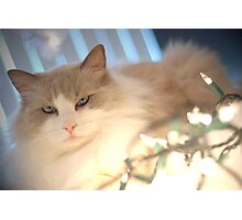 Holiday Grouch Photographic Print