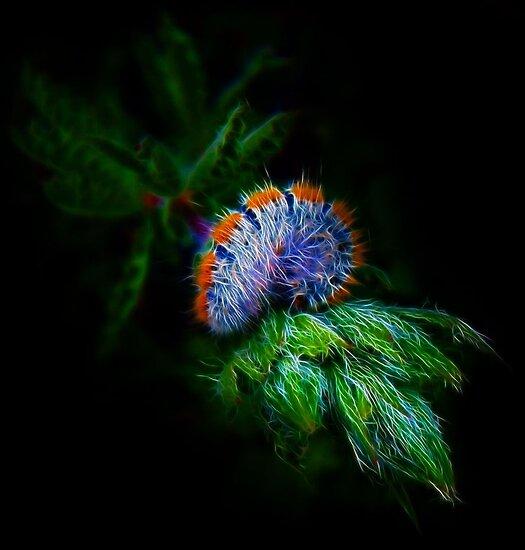 Fibonacci's Fractal Elegy by Atılım GÜLŞEN