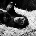 Playful Chimpanzee by Neil Clarke