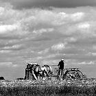 Amish man working by Jennifer P. Zduniak