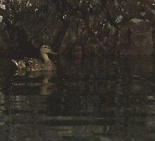 Mallard - Bedrock contrast by JimSanders