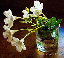 Wake of the Desert Flower by ChasSinklier