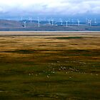 wind power by natalie angus