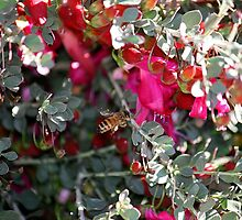 Honey Bee meets Native Flower by Wendy78