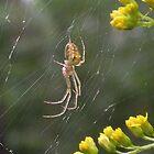 Spider by SophiaDeLuna