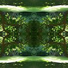 Kaleidoscope - Tree Series Zen by Circe Lucas