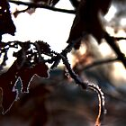 Frosty Fall Leaves in the Morning by Chad Ely