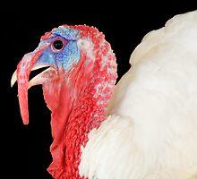 You Turkey! by Marcia Rubin