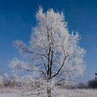 Frosty Tree by Chad Ely