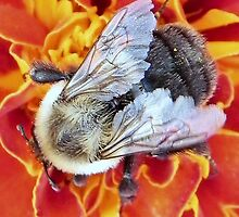 Bee-having © by Dawn M. Becker