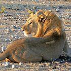 Mr Lion by Graeme  Hyde