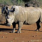 Watching White Rhino by Graeme  Hyde
