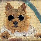 Norwich Terrier in Cool Shades by susan stone