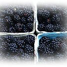 Blackberries by Jonice