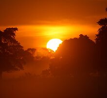 Sunrise of Oxley #5 by Jodie Bennett