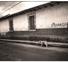 The Dog of Anarchy - Xela, Guatemala by Alex Zuccarelli