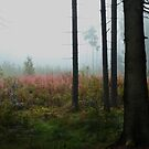 Forest meadow in mist by Antanas