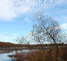 Fall colours and cotton clouds by Febev