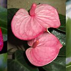 Anthurium tryptich by TFoxPhotos