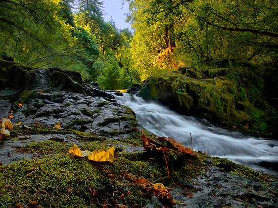 Don't Hold Back ~ Sweet Creek ~ by Charles & Patricia   Harkins ~ Picture Oregon