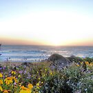 Sunset-West Coast Style by NancyC