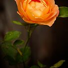 A Rose for You by Simon Duckworth