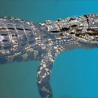 Alligator Watching You by Anangeli