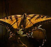 Tiger swallowtail by zzsuzsa