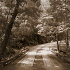 Sepia Road by Susan Segal