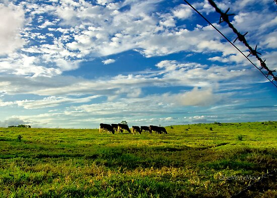 Late Afternoon Grazing by onemistymoo
